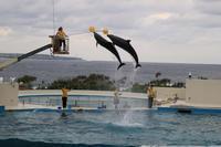 海洋博公園、イルカショーなど~南国情緒と戦禍の爪痕に触れた沖縄の旅#9~ - 風の彩り-2