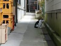 岩手へお出かけ  つづき - かえるネコ