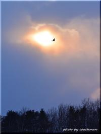 夕陽に飛ぶ - 北海道photo一撮り旅