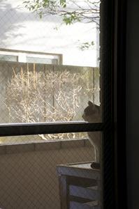 最近の猫事情63 - 鳥会えず猫生活