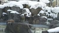 奥鬼怒・鬼怒川温泉の旅(1)-加仁湯に到着! - Pockieのホテル宿フェチお気楽日記III