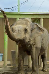 テルに会いたくて - 動物園へ行こう