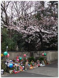 本曇り - 下坂中学校 写真部 Ⅱ