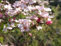 『木曽川水園の樹木達~』 - 自然風の自然風だより