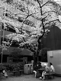 花曇りの日 - 節操のない写真館