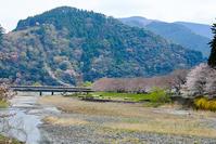 さくら2019 #1 - 長い木の橋
