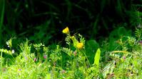 小さな花たちⅡ - 長い木の橋