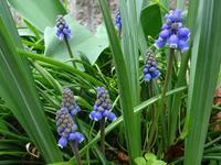 雑草に負げずに咲く花花 - 花と葉っぱ