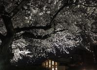 夜桜会、ライトアップされて、とても綺麗でした🌸 - Bouquets_ryoko