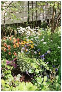 お花畑の春の庭 - natu     * 素敵なナチュラルガーデンから~*     福岡で庭造り、外構工事(エクステリア)をしてます