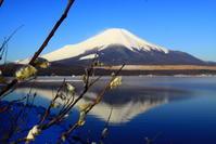 31年3月の富士(21)山中湖パール富士 - 富士への散歩道 ~撮影記~