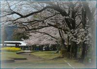 花畑 - PHOTO GALLERY Y&S MAKING