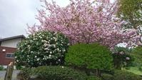 ボンボン桜でお花見キャンプ - 加波山麓で会いましょう。