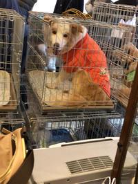 3月23日譲渡会の報告 - 犬との穏やかな日々
