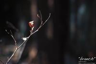 """""""branch"""" - ~まきち写真工房~"""
