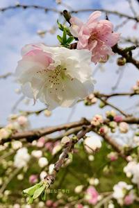 2019春の花鼻記録写真 - はな花季行/おっ!オッ?