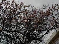 春の花と犬散歩(No.19) - 薪窯冬青犬器
