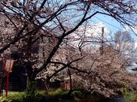 卯月のあまたの会ご案内 - MOTTAINAIクラフトあまた 京都たより