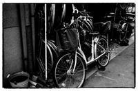 壬生-2 - Hare's Photolog