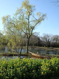 『木曽川水園の花達~』 - 自然風の自然風だより