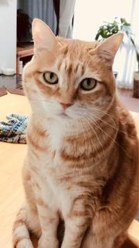 ピンクの畳 - いぬ猫フェレット&人間