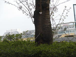 19-03-31(日)三日見ぬ間の -