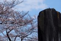 春爛漫 - 錦眼鏡