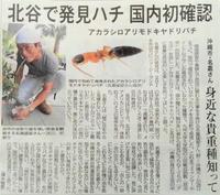北谷の美浜で日本初記録のハチを見つけました。アカラシロアリモドキヤドリバチ。 - アルカエの日々のこと