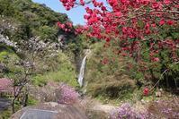藤田八束の鉄道写真@鹿児島県姶良市に龍門滝あり、日本の滝百選の名所と桜・・・龍門滝温泉と桜、そして美しい滝 - 藤田八束の日記