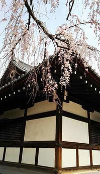 お花見:因幡薬師 - お休みの日は~お散歩行こう