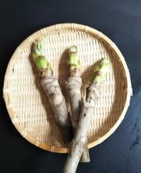 タラの芽初収穫 - 海辺のキッチン倶楽部もく