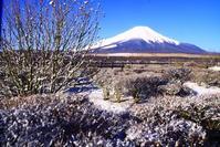 31年3月の富士(22)山中湖長池の富士 - 富士への散歩道 ~撮影記~