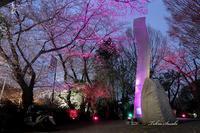 水神前の桜のライトアップ - Welcome to Sasaki's PhotoBlog!