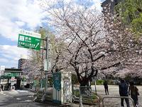 お花見弁当と新元号 - マイニチ★コバッケン