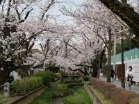 桜花を掬う&改元 - 梟通信~ホンの戯言
