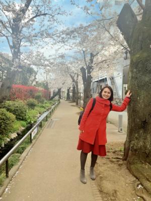 北沢川緑道桜並木 - 日本語学校・東京ひのき外語学院