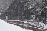 またまた雪降り - マスター写真館2