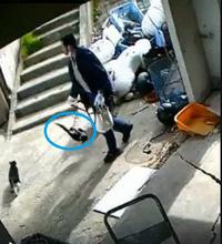 逮捕「猫連れ去り事件の男」 - 娘といっしょ
