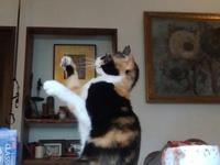 三毛猫ひかちゃん-82- - 殿様の試写室