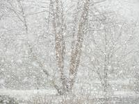 春の雪。 - 大朝=水のふる里から