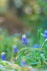 3/31草取り三昧 - 「あなたに似た花。」