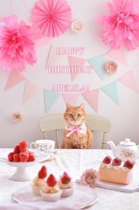 あぺりら13歳の誕生日Happy Birthday Apelila! - お茶の時間にしましょうか-キャロ&ローラのちいさなまいにち- Caroline & Laura's tea break