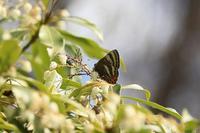 春の蝶 - 菜奈ちゃんコーナー