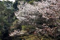 続・安芸の宮島☆2019春 - できる限り心をこめて・・Ⅲ