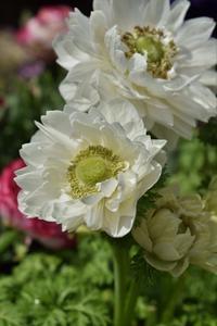 花冷えを通り越す寒さでも花は意外と元気 - ヒバリのつぶやき