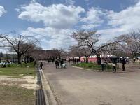 (吹田行事)万博公園 桜まつり 2019 / Cherry Blossom Festival 2019 in Expo'70 Commemorative Park - Macと日本酒とGISのブログ