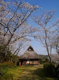 古民家と桜 - ほっとひと息