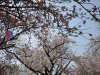 【外人観光客に人気の北区の花見スポット】 - お散歩アルバム・・穏やかな晩秋