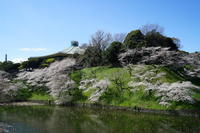 4月1日千鳥ヶ淵と隅田川 - てしやから君の撮影日記