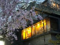 上野公園夜桜と、北千住イタリアン - くずし割烹 花々女将通信